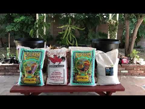Dragon Fruit Potting Soil Mixture Youtube Dragon Fruit Potting Soil Creative Planter