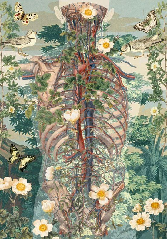juan gatti | Art... | Pinterest | Anatomía, Ilustraciones y Fisioterapia