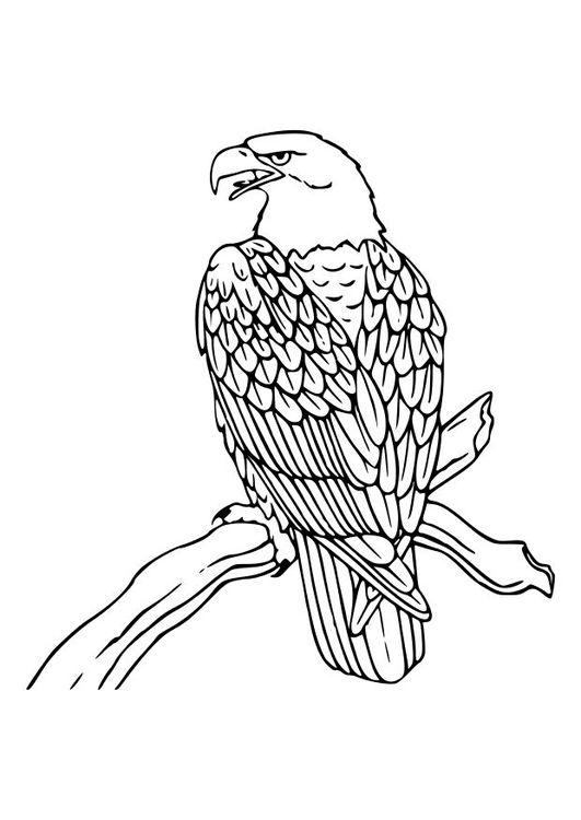 Página para colorir águia | Tudo misturado | Pinterest