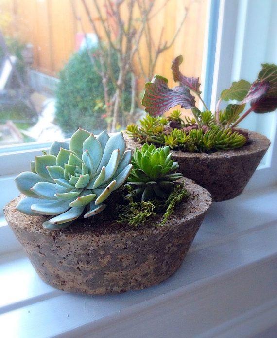Natural Organic Look Hypertufa Indoor Outdoor Succulent 400 x 300