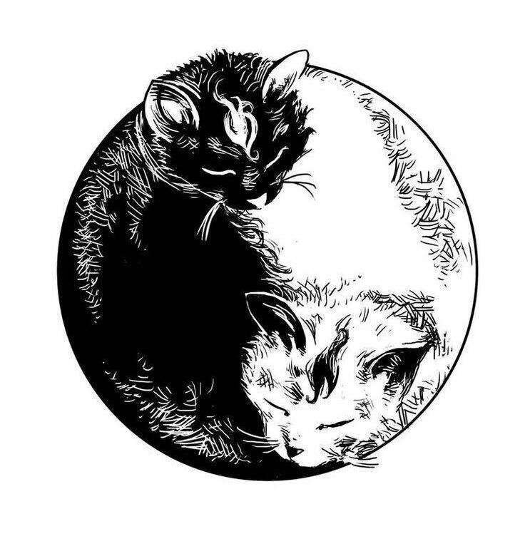 выращивания теплолюбивых коты инь янь арт кошек свободу