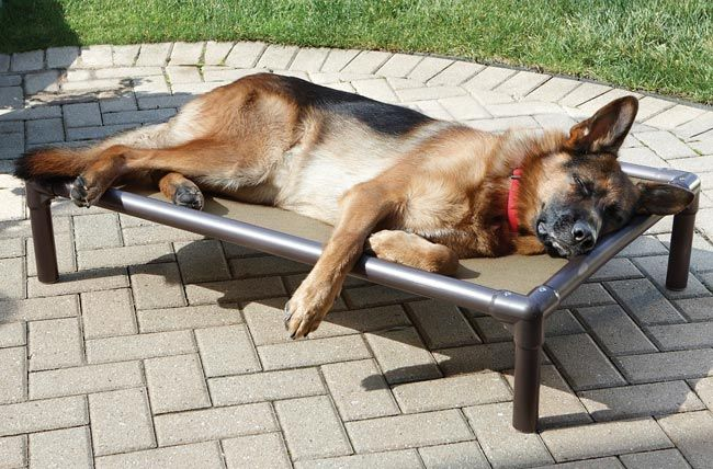 Raised Cooling Bed Outdoor Dog Bed Dog Friendly Backyard