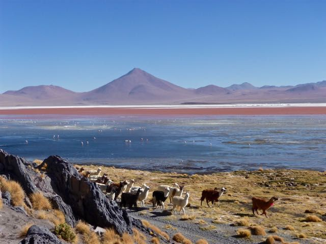 Tour Salar De Uyuni   A Unique Journey  There are many highlights in South America think about Macchu Pichu in Peru, Christ Redeemer in Rio de Janeiro, the Galapagos Islands of Ecuador and the Amazon Rainforest that spreads out over all countries in the North of the continent. But what a lot of people tend to overlook is the Bolivian Altiplano.