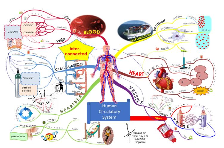 Human Circulatory System | Santé | Pinterest | Circulatory ...