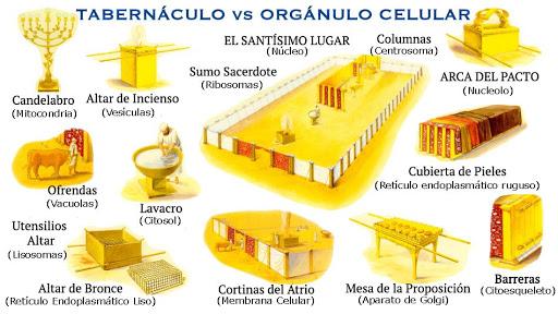 El Tabernaculo Y Sus Partes Busqueda De Google Tabernacle Of Moses Tabernacle The Tabernacle