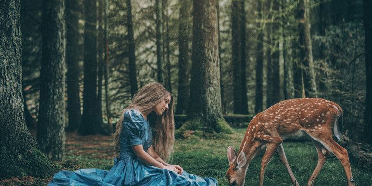 Photo Contests Beautiful Photography Nature Photography Contests Forest Creatures