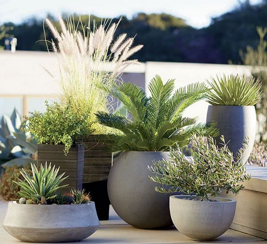 Photo of 110+ Container Gardening Tips You Ever Need To Know!