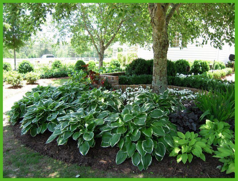 shade border garden design - Google Search