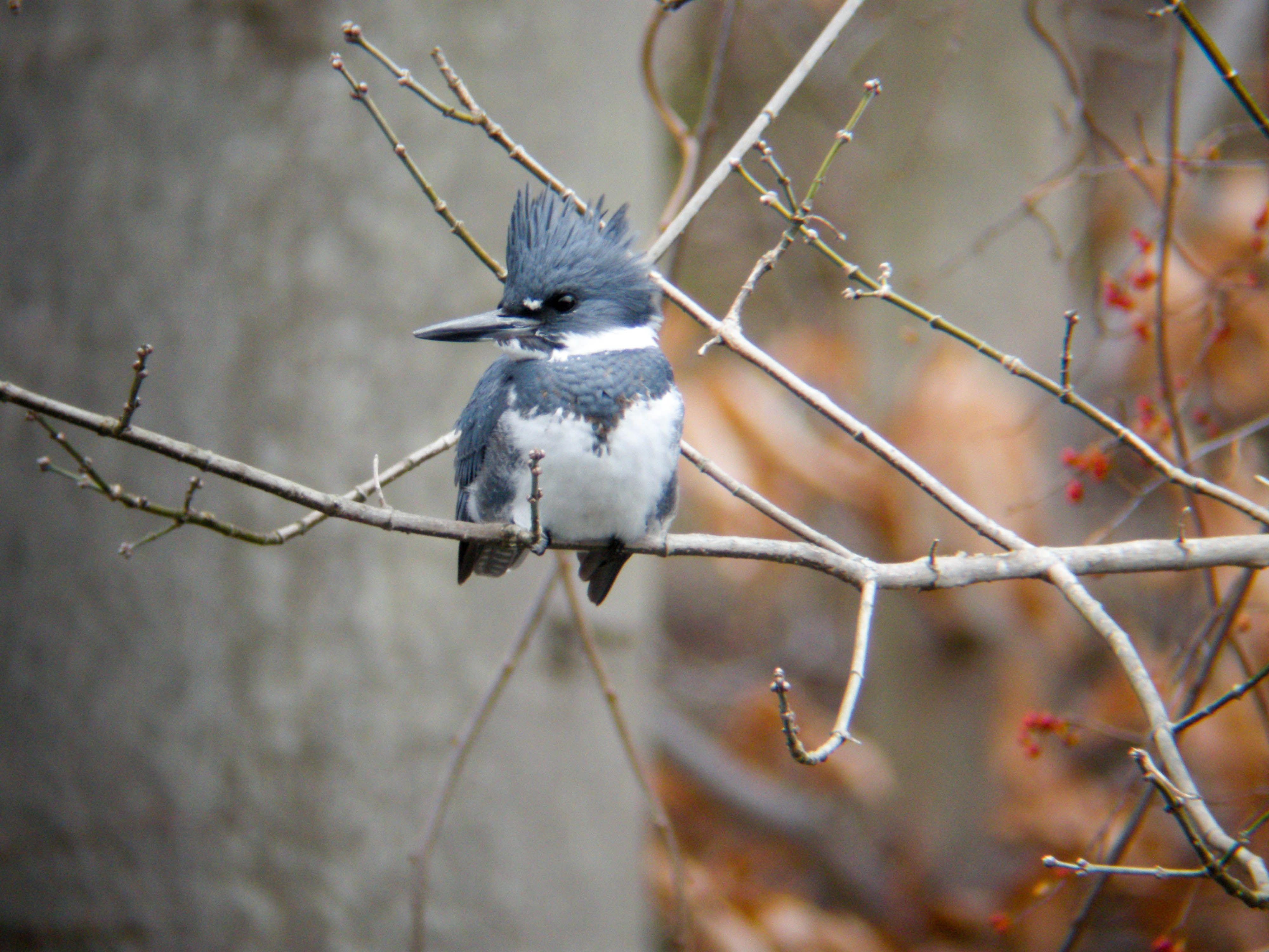 gbbc great backyard bird count teaching science pinterest