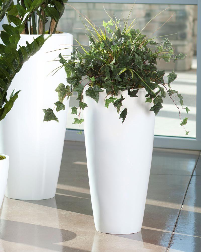 office flower pots. English-Ivy-pot Office Flower Pots
