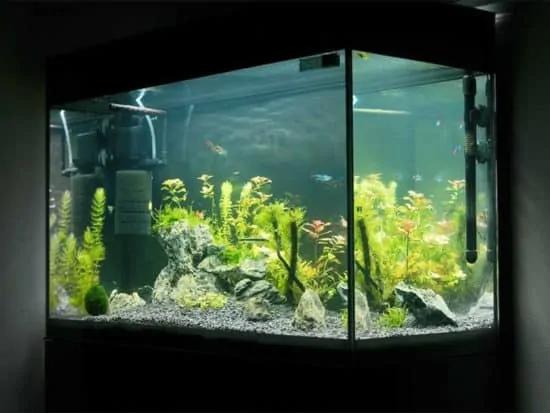 Betta Fish Tank Equipment In 2020 Betta Fish Tank Saltwater Tank Fish Tank