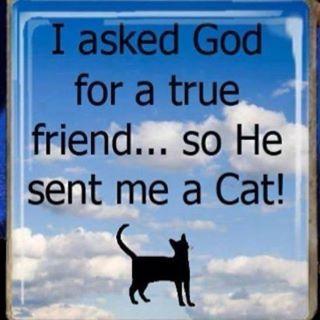 He sent me a Cat... ♥