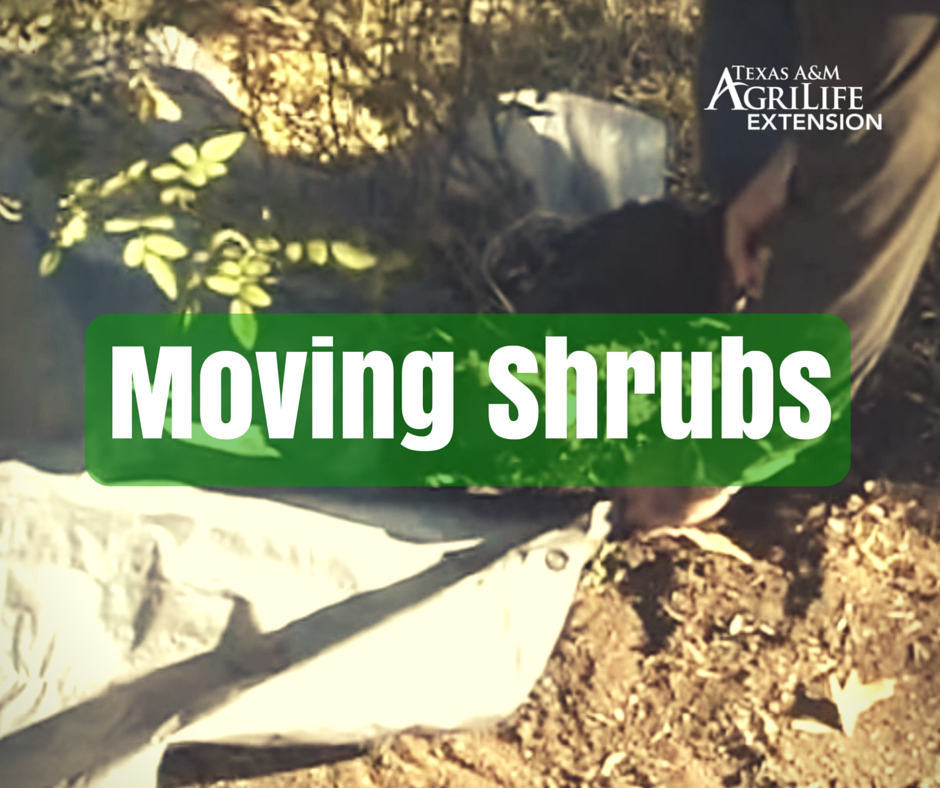 Moving Shrubs | Landscaping & Trees | Small trees