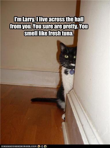 Cat lady pick up lines