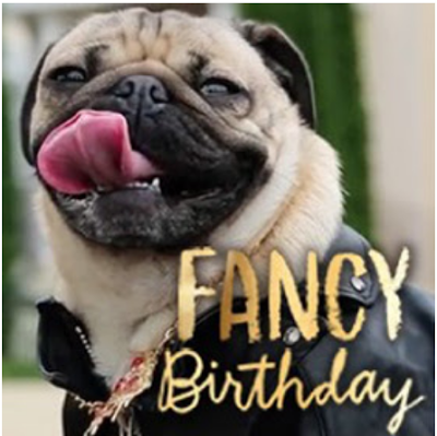 Tri cities on a dime fancy birthday doug the pug ecard at american exclusive fancy birthday doug the pug ecard at american greetings use the link below to receive a free trial subscription at ameri m4hsunfo