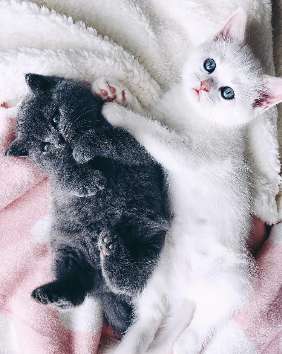 If You Re Having A Bad Day Kitties Always Solve It Cute Animals Kittens Kittens Cutest