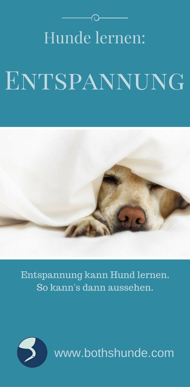 """Entspannung auf """"Kommando"""" Ich habe da für mich ja so meine eigenen Tricks: Eine Tasse Tee & mit einem spannenden (Hör-)Buch in die Badewanne oder mit dem Hund raus. Das sorgt bei mir (meistens) für Entspannung auf """"Kommando"""". Für Alma haben wir mittlerweile ähnliche Signale im Einsatz. Manchmal kommt es vor, dass der Punktehund einfach in der Gegend rumsteht und …"""