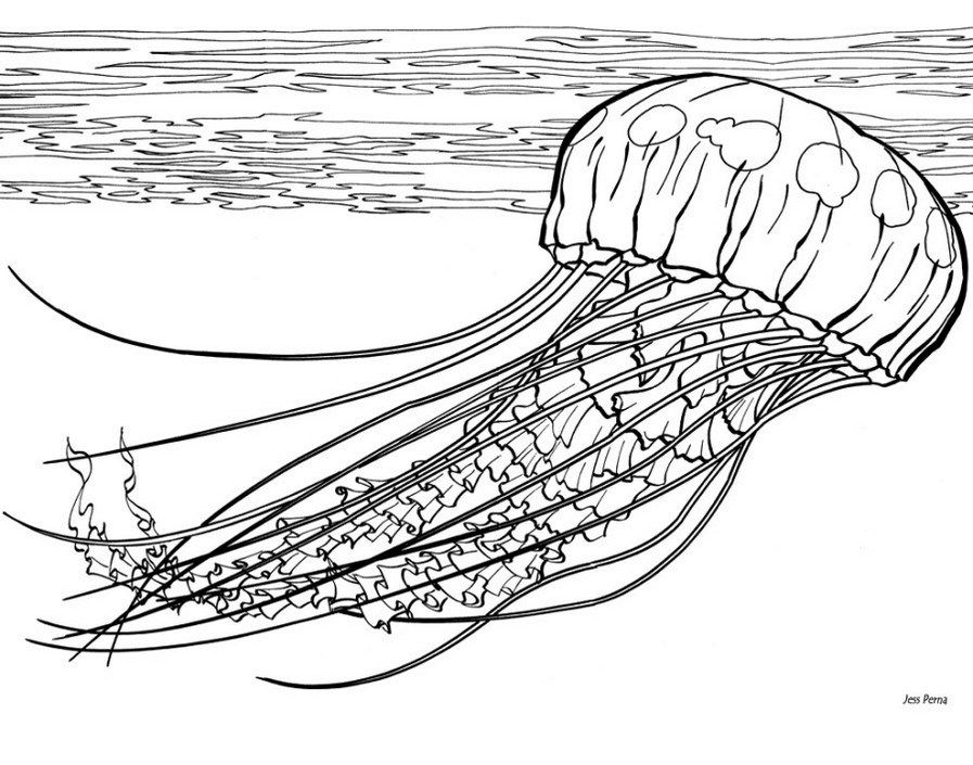 Jellyfish Coloring Pages Printable Fish Coloring Page Animal Coloring Pages Coloring Pages
