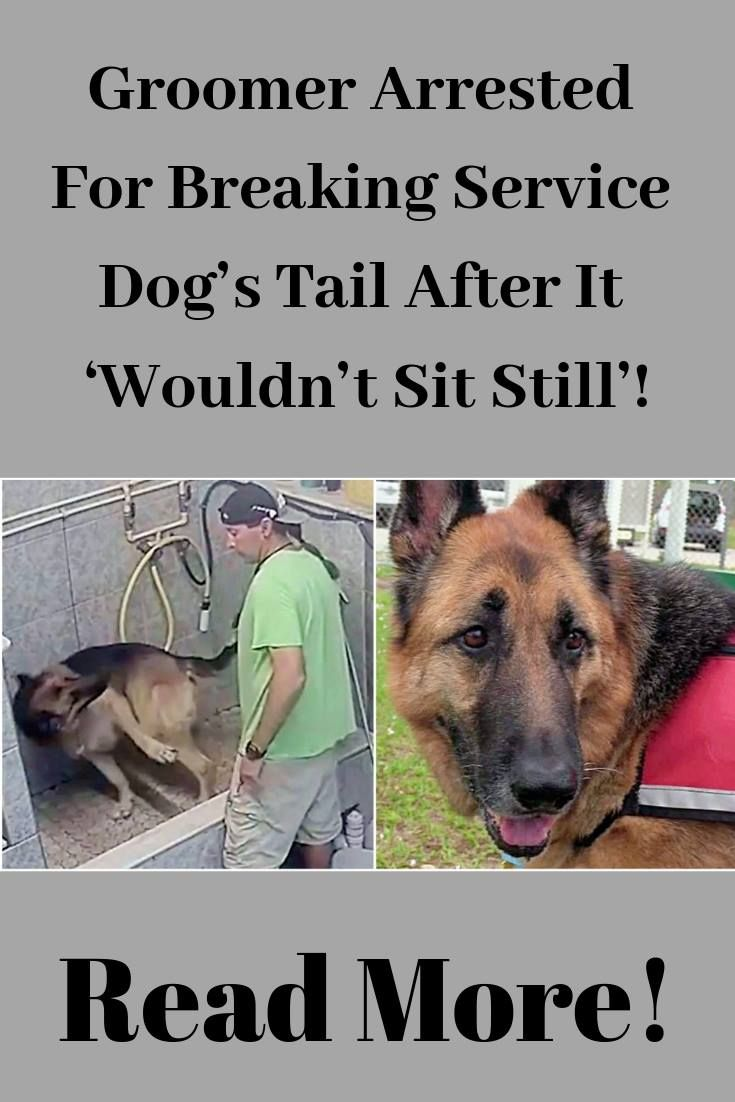 15++ Brevard county sheriffs office animal services ideas