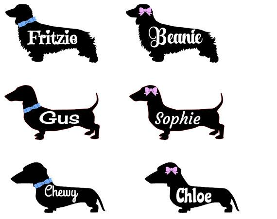 Personalized Dachshund Decals Long Haired Short Haired Dachshunds