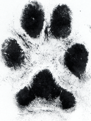 Tattoo Of Actual Paw Print I Want To Do This Brilliant Idea For That Four Legged Best Friend Dog Tattoos Paw Tattoo Print Tattoos