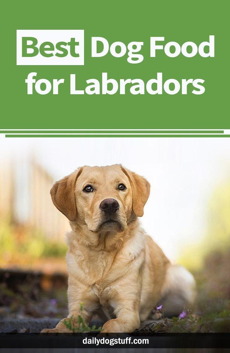 Best Dog Food For Labradors Best Dog Food Best Dogs Dog Food