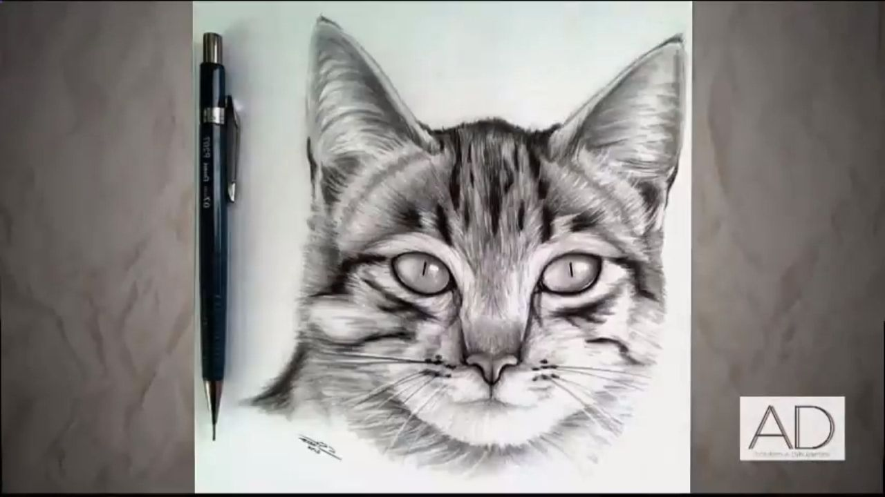 Dibujo Gato Realista - Drawing Realistic Cat | Speed Drawing Time ...