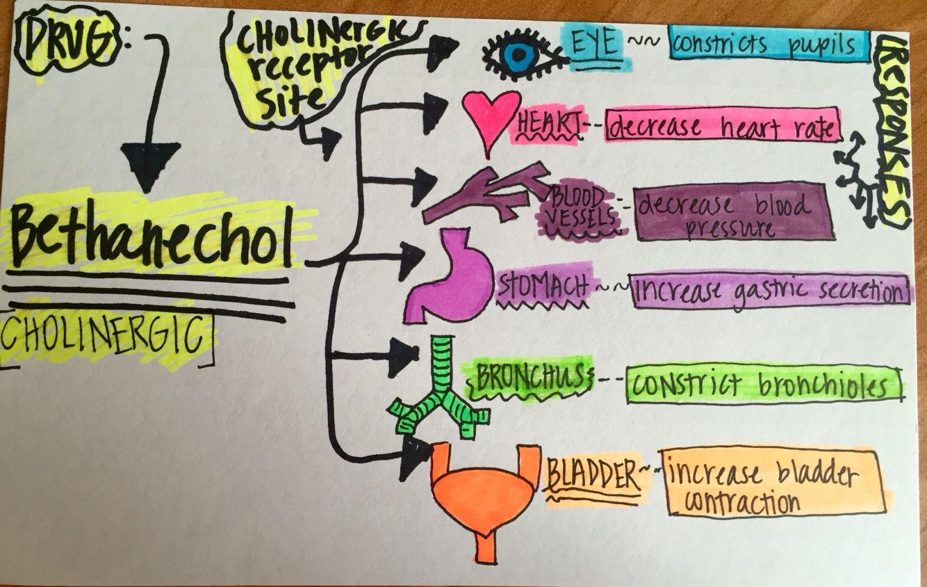 BethanecholAdrenergic blocker pharmacology (With images