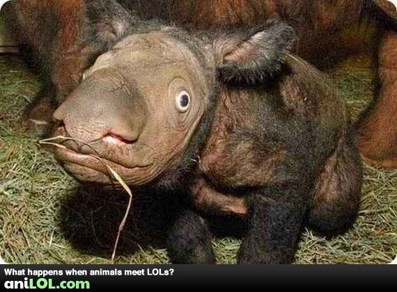 Weird Animals Funny 11