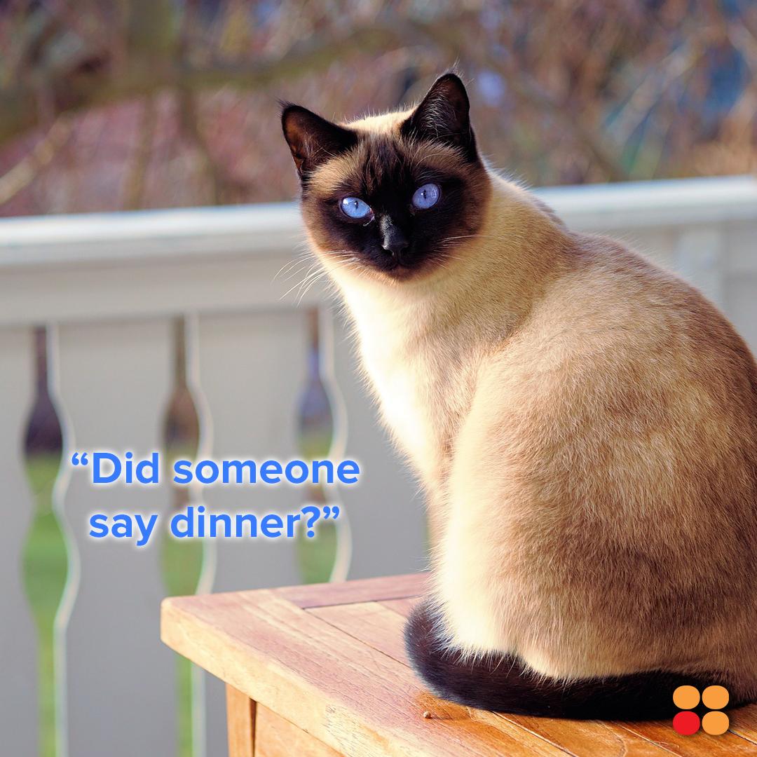 Happy International Cat Day International Cat Day Cat Day Appliance Rental