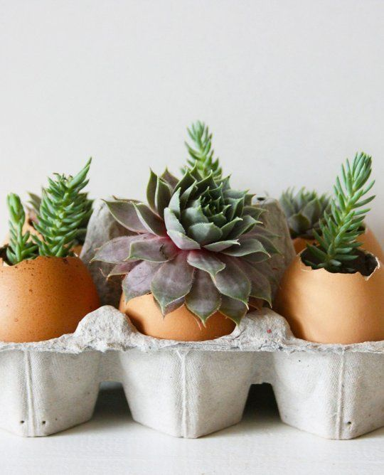 How To Plant Succulents In Eggshells