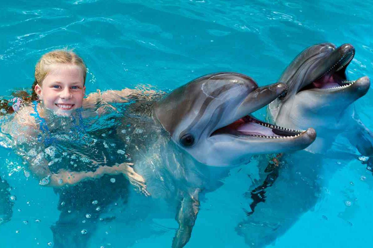 Vietato Nuotare Con I Delfini Troppo Stress Per Gli Animali La