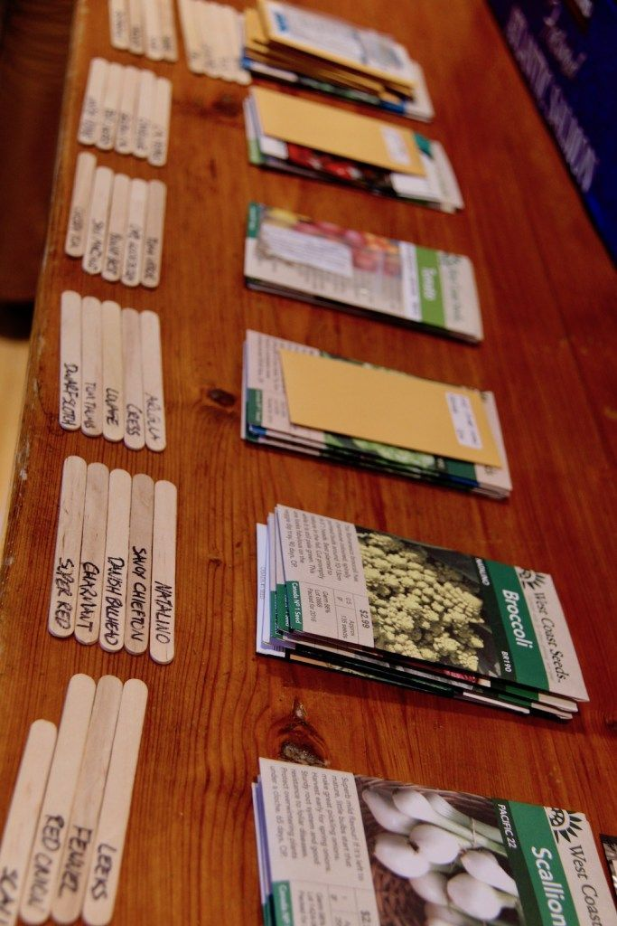 Garden Therapy Different Garden Ideas: Types Of Seeds: Explaining Open-Pollinated, Heirloom