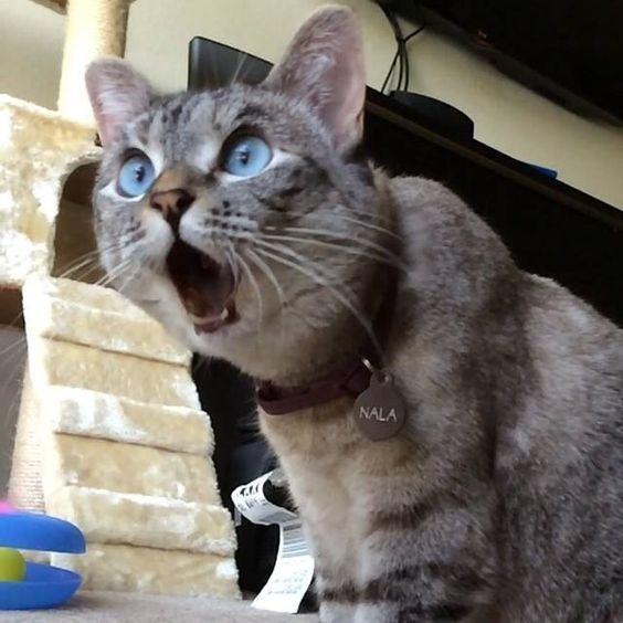 Cat Watching Horror Movie [VIDEO] – CatTime