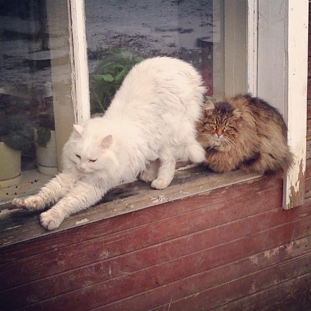 "cat-in the window """