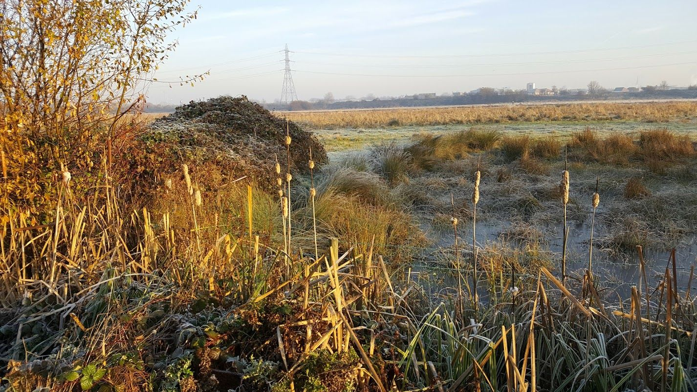 Walthamstow  marshes on a cold December day