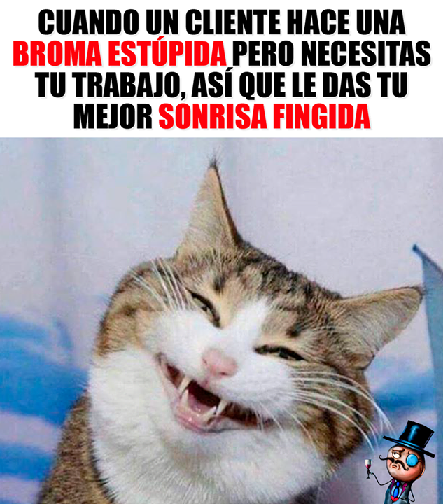 Necesitas El Trabajo Animals Doing Funny Things Funny Cat Memes Cute Cat Memes