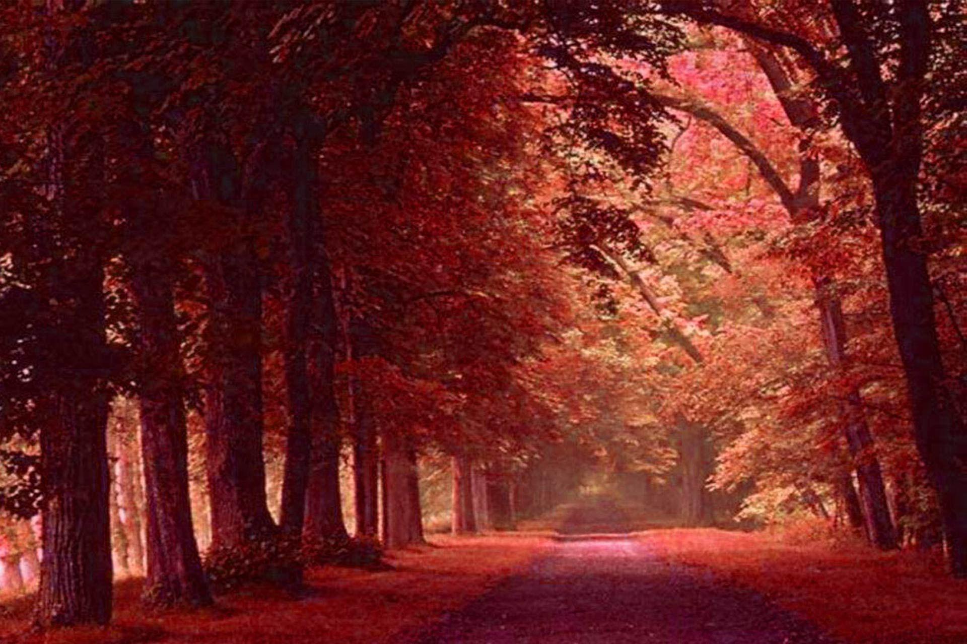 Fondos de escritorio paisajes oto ales en 4k para el fondo - Imagenes paisajes otonales ...