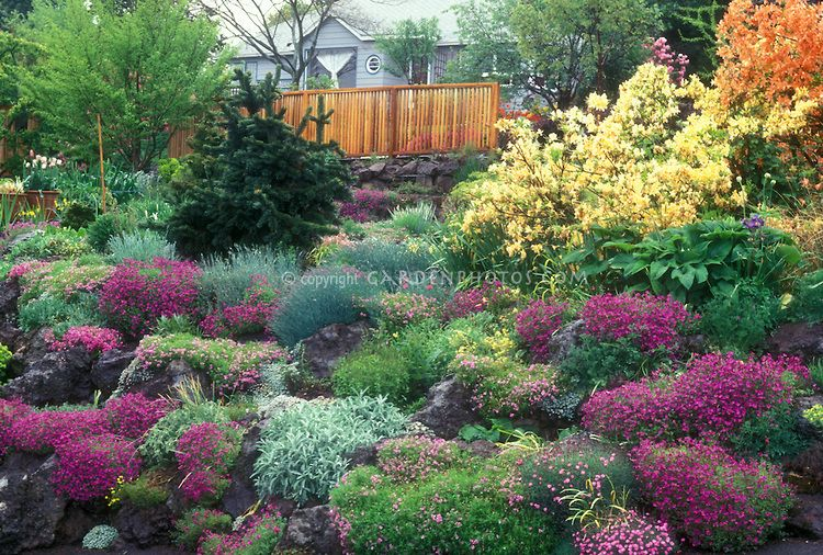Gorgeous Garden In Spring Flowers With Rhododendron Azalea Bushes Evergreens Bulbs Rock Garden Plants Pere Rock Garden Plants Rock Garden Planting Flowers