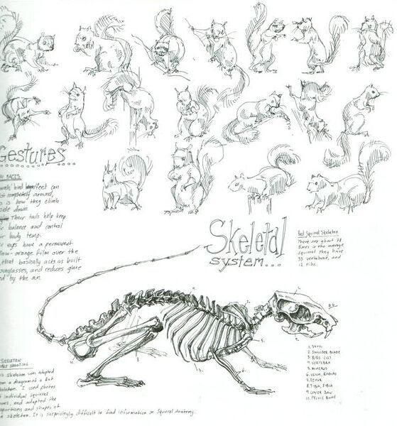squirrel skeleton anatomy and position