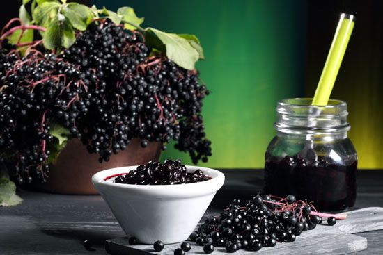 Elderberry Recipes: Elderflower Liqueur #elderberryrecipes
