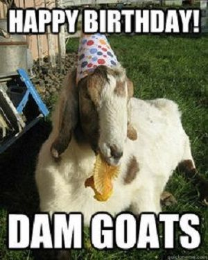 Goat Birthday Funny Happy Birthday Meme Humour Cadeau Anniversaire Anniversaire