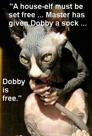 Dobby The House Elf Sphynx To The End Pinterest Cats Sphynx