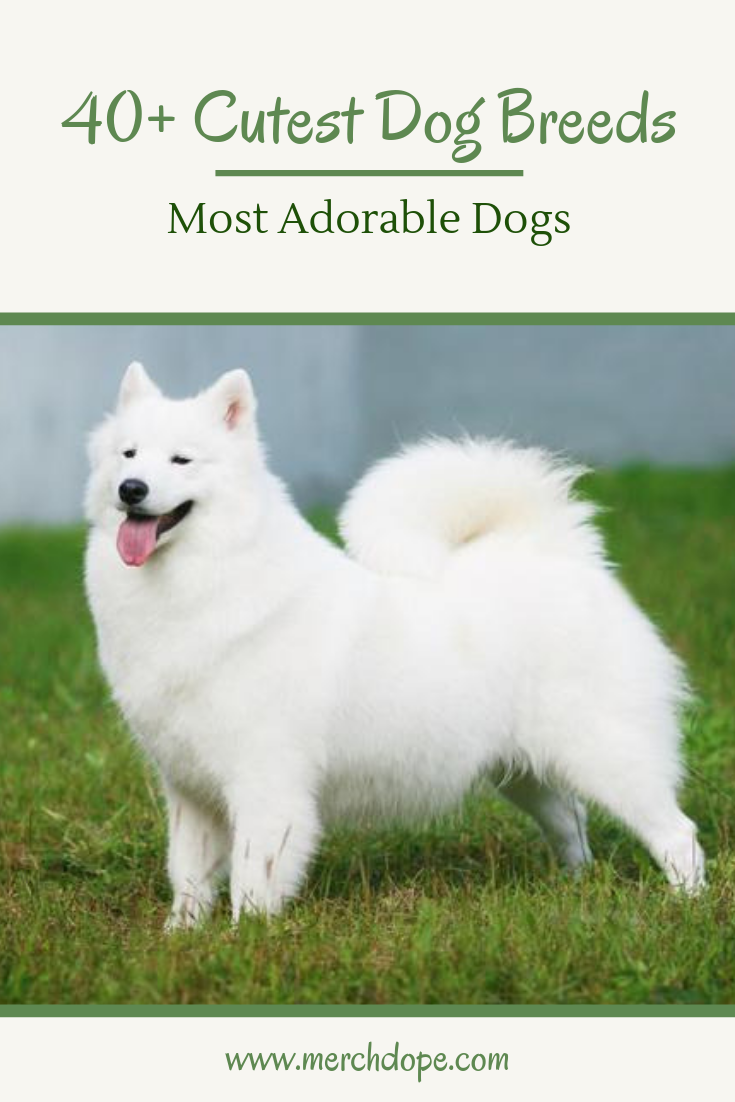 40 Cutest Dog Breeds Most Adorable Dogs Merchdope Dogbreeds Cutestdogs Adorabledogs Dog Breeds Cute Dogs Breeds Cute Dogs