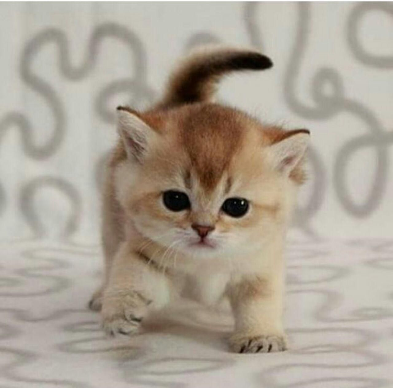 Hiya Pin Pal You Found Us Yay We Follow Followers We Love Cats Couture Comedy And You Please Com Cute Baby Animals Kittens Cutest Cute Cats And Kittens