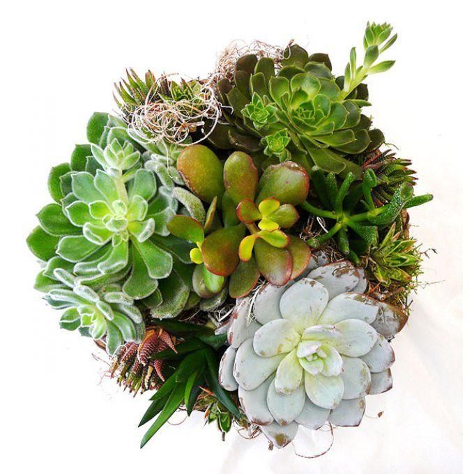 la corbeille succulente vente de composition de plantes grasses livraison de plantes d. Black Bedroom Furniture Sets. Home Design Ideas