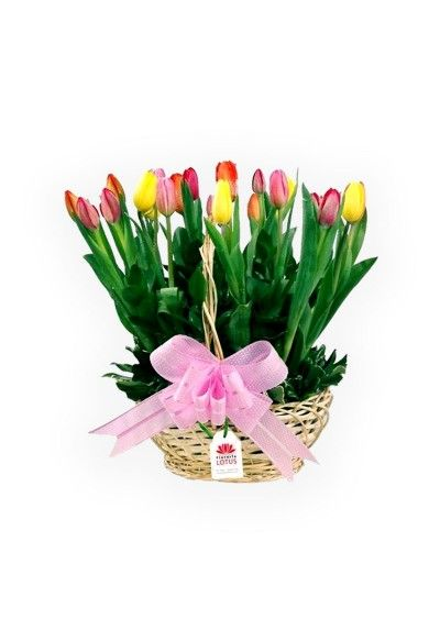 Tulipanes En Canasta Catálogo Del Día De La Madre