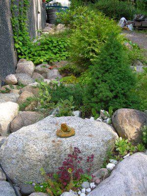 Kiviä ja havuja