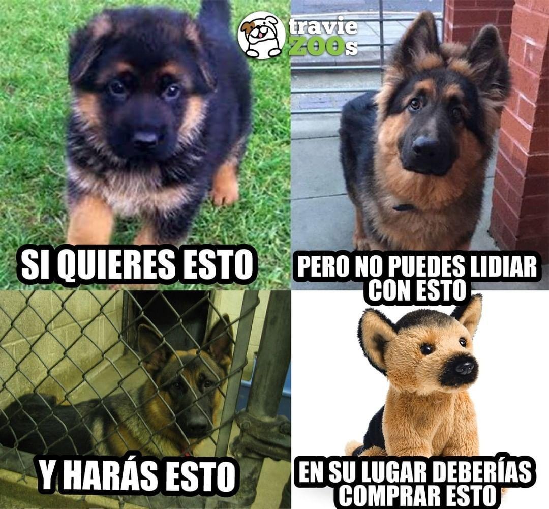 La Imagen Puede Contener Meme Y Texto Defiendo A Los Animales Dogs Pet Dogs Y Pets