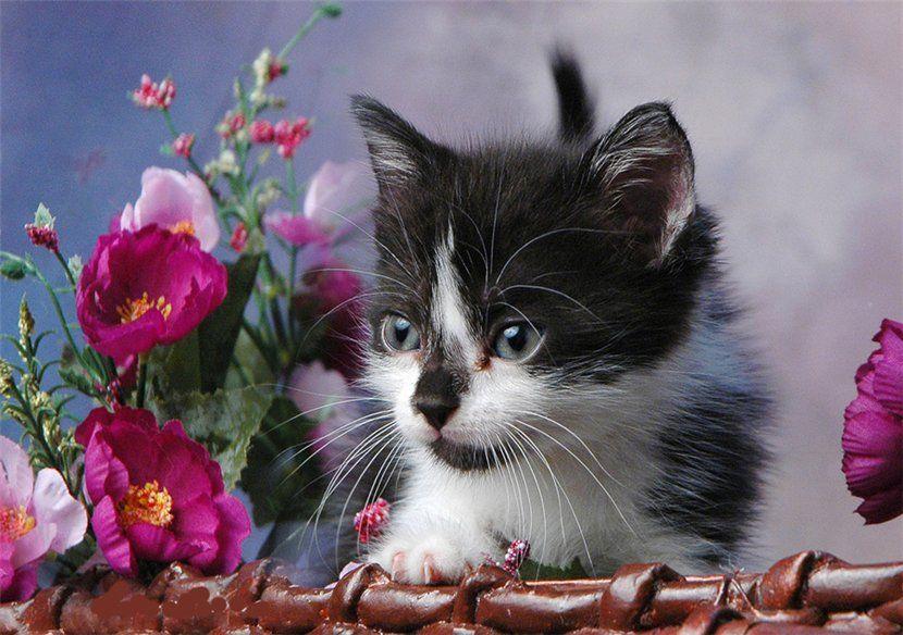 Открытка кошка с цветами, своими